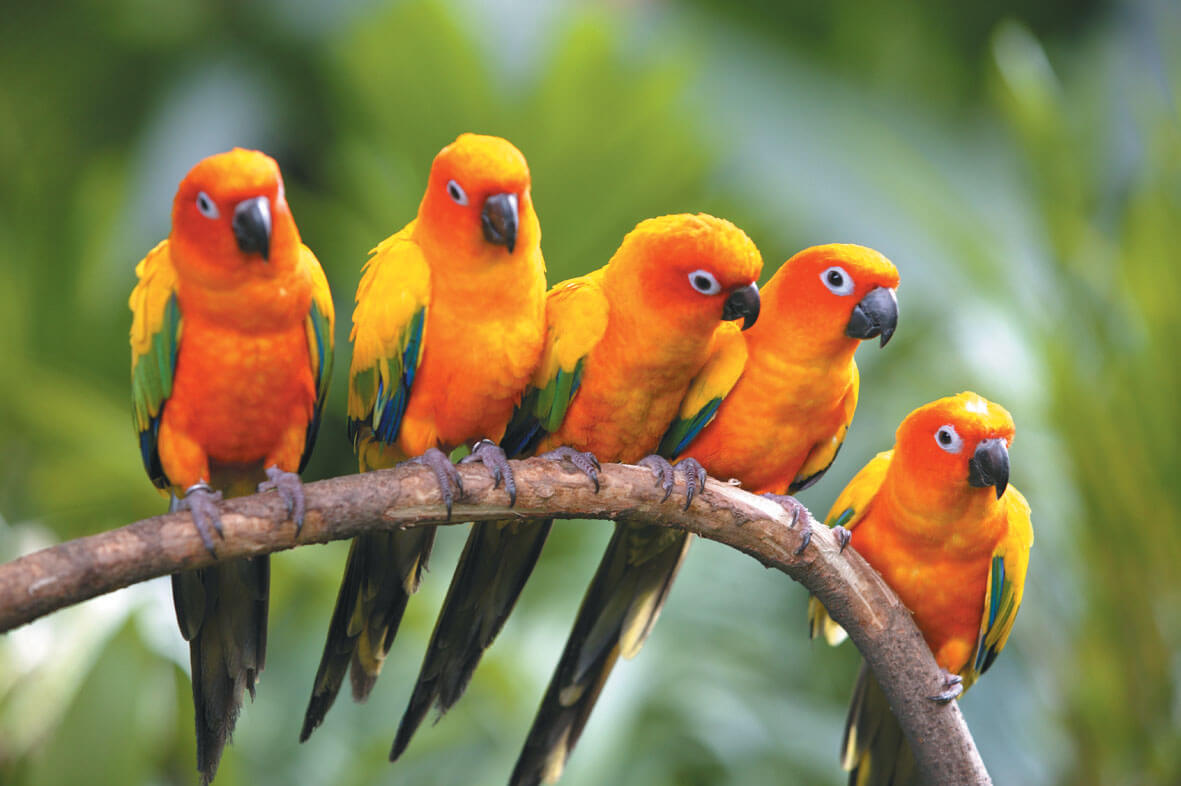 Exotic Bird-The Jurong Bird Park in Singapore is the largest bird park